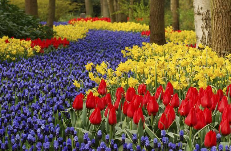 C 39 est le moment de planter les bulbes de printemps - Bulbes a planter au printemps ...