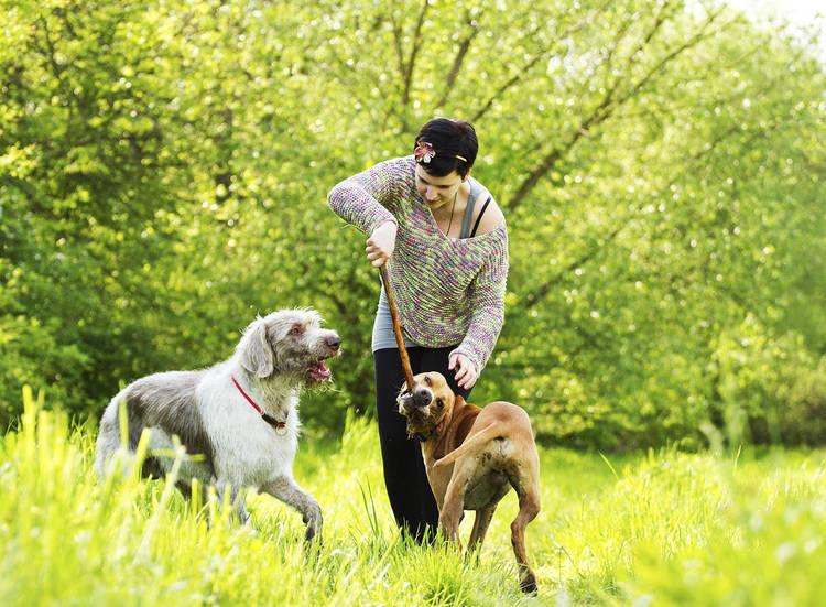 Dresser son chien : les 4 leçons essentielles de savoir