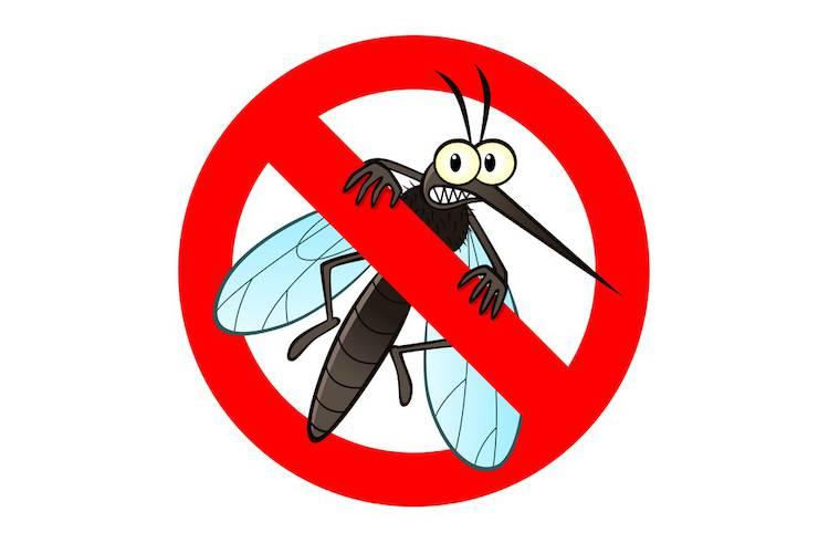 3 rem des naturels contre les piq res de moustiques infos bien tre sant t l pro. Black Bedroom Furniture Sets. Home Design Ideas