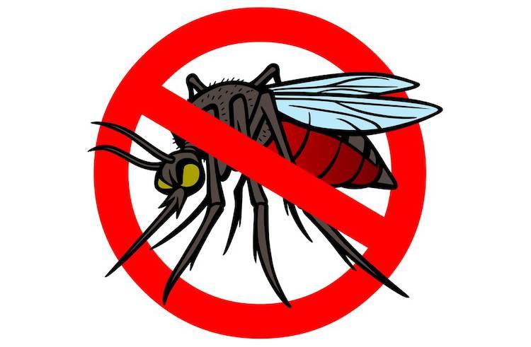 moustiques l attaque 3 trucs pour limiter l invasion infos jardin t l pro. Black Bedroom Furniture Sets. Home Design Ideas